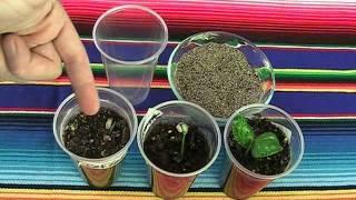 Coffee Beans, Avocado and Asparagus