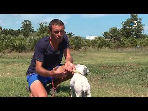 Création d'une pension canine à Lucciana
