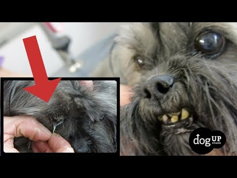 we-found-this-in-a-dogs-eye-while-doing-a-face-trim