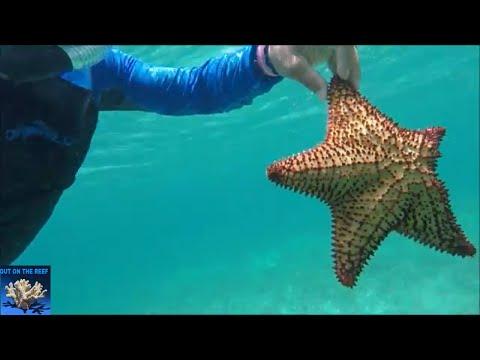 Atlantic Ocean Coral Reef Marine Life