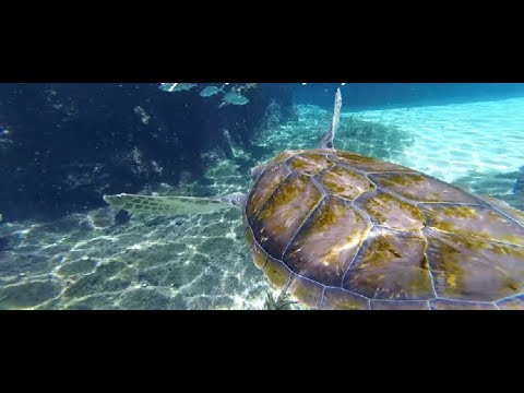 7 Day Caribbean Cruise Day 4 - Georgetown, Cayman Islands