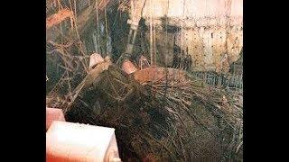 Чернобыль,под саркофагом Документальные фильмы 2017