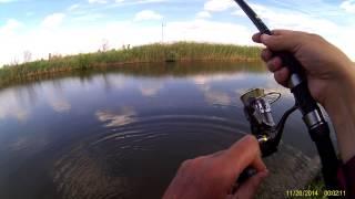рыбалка дашкины пруды цены