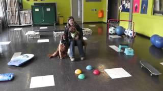 Fun Trick Dog Training Trailer