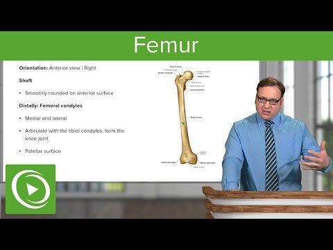 Femur – Anatomy | Medical Education Videos