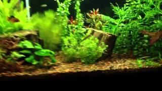 tour of the 38 gallon aquarium
