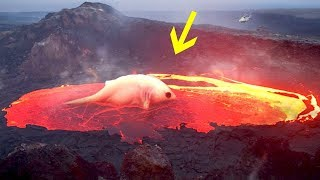 Wer wohnt in den Tiefen eines Vulkans?