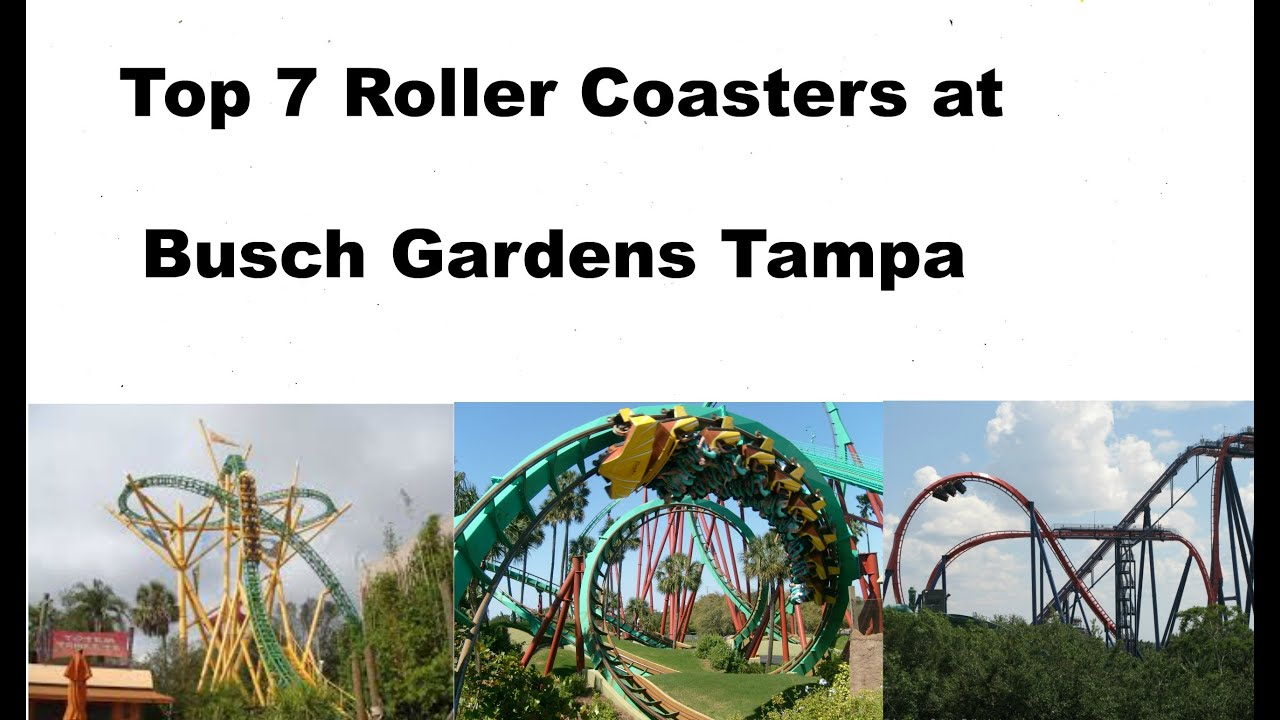 top 7 roller coasters at busch gardens tampa youtube