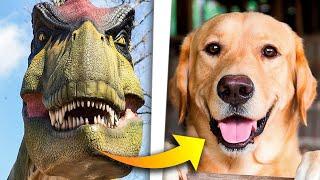 ¿Fueron los dinosaurios tan inteligentes como un perro? Paleontólogo responde | The Wild Project