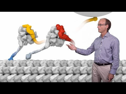 Ron Vale (UCSF, HHMI) 2: Molecular Motor Proteins: The Mechanism of Dynein Motility