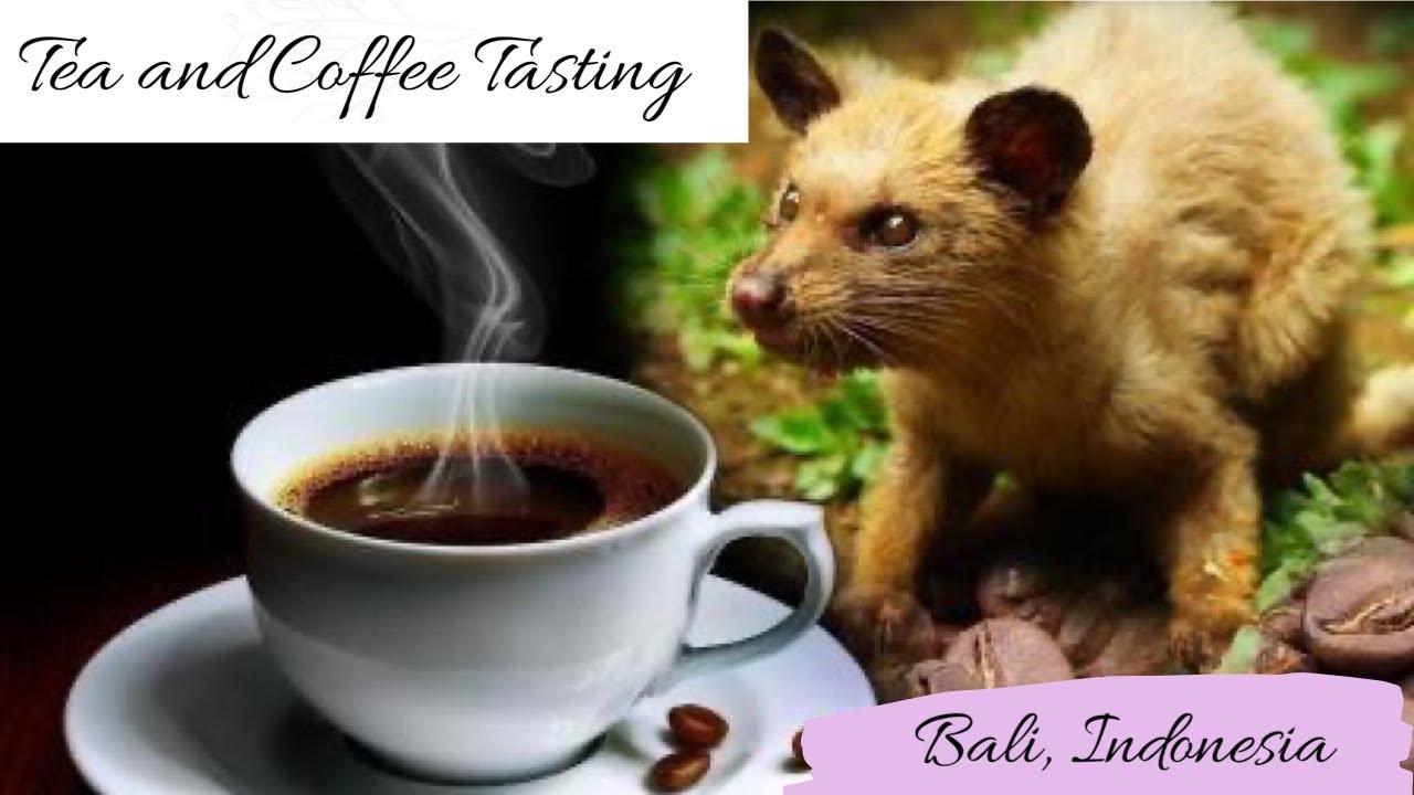 Sale of kopi luwak in Indonesia   Project LUWAK Singapore  Kopi Luwak Coffee Plantations