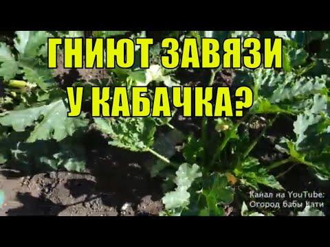 Почему гниют завязи у кабачков на кусту? что делать если гниют кабачки?