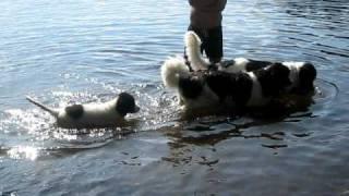 Mina hundar badar