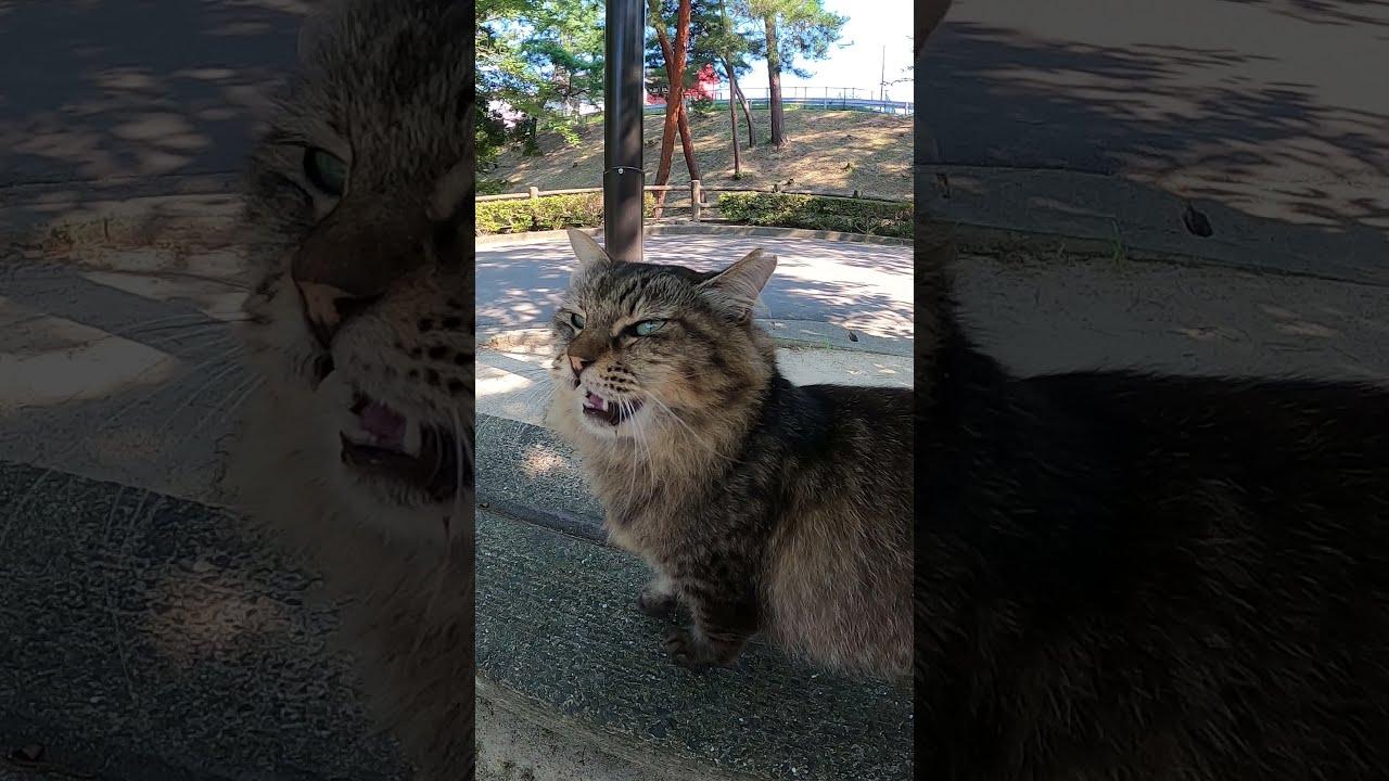 フワフワ長毛猫がモフられに来た