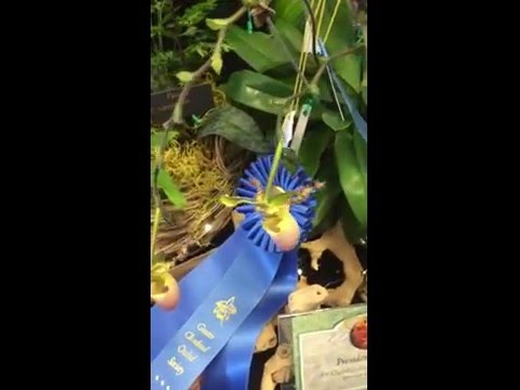Three Rivers Orchid Society Display table at GCOS show and sale