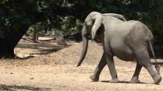 04102013 Mana Pools Elephants In The Campsite YOUTUBE2