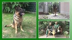 Hundevermittlung - Juli/August 2019 (Tierheim Hannover TV)