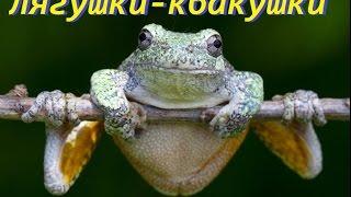 Лягушки-квакушки. Интересное в мире животных