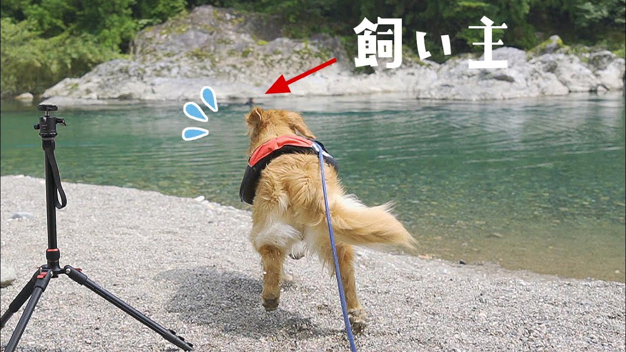 【涙腺崩壊】飼い主が川に飛び込んだ後愛犬が取った行動が・・・