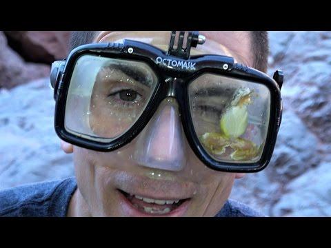 4K Frog Mask Surprise! Nature Travel Fun Reptiles & Amphibians.