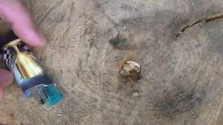 Поломалась зажигалка,не беда  добыть огонь 2  пьезоэлемент(добыть огонь с помощью пьезоэлемента., 2014-10-10T10:24:10.000Z)