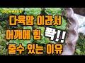[시니후니] 인덕원 동편마을 카페거리! 디자인카페 아프리카 다녀왔어용~ (피치블라썸,텐저린진저 잎차 마시고 왔어요!)