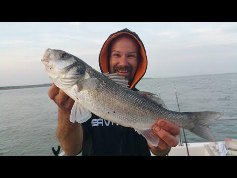 Hill Head Fishing Southcoast United Kingdom
