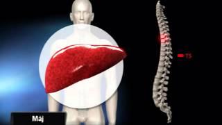 Az idegrendszer csökkentése a szalagféregben, Szalagféreg az emberben, hogyan lehet meghatározni