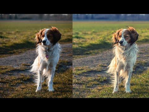 Dog Photo Retouching | Photoshop & Lightroom