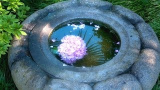 Zen Garden Flowers - Relaxation, Meditation, Mindfulness Full Length