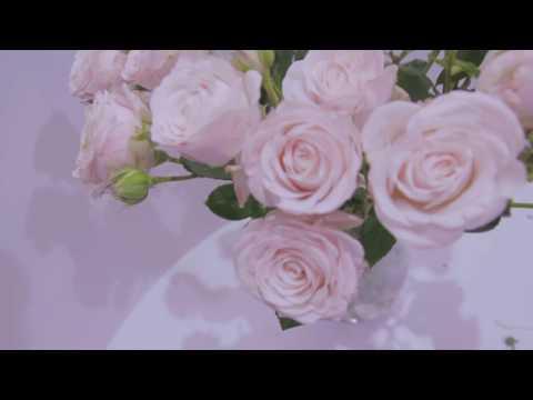 Кустовая пионовидная розовая роза
