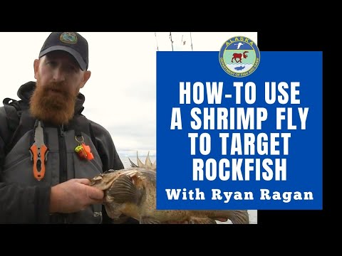 Using A Shrimp Fly To Target Rockfish