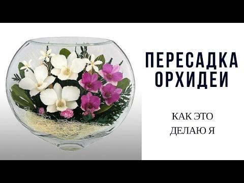 Посадка и пересадка орхидей © Inna Liapin - Успешный уход