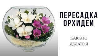 Пересадка Орхидеи(Видео об уходе за орхидеями, полив: https://www.youtube.com/watch?v=7beHeeXhv40 В этом видео Вы увидите как я пересаживаю орхиде..., 2014-10-01T14:22:14.000Z)