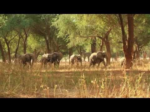 Elephants of the Lower Zambezi, Zambia