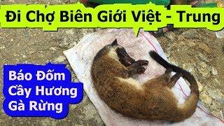 Báo Đốm, Cầy Hương, Gà Rừng... Đi Chợ Biên Giới Việt - Trung ( P1 ) Quá Nhiều Điều Thú Vị   Sapa Tv