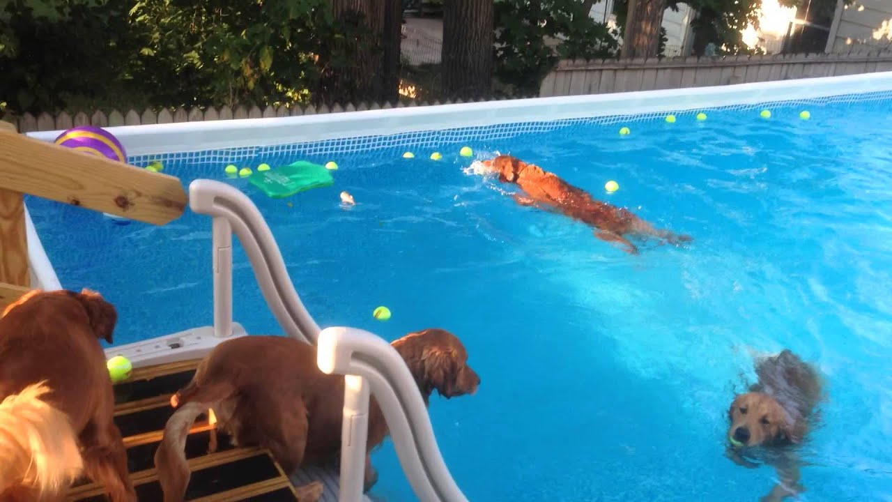Dogs swimming in intex pool youtube - Where is my nearest swimming pool ...