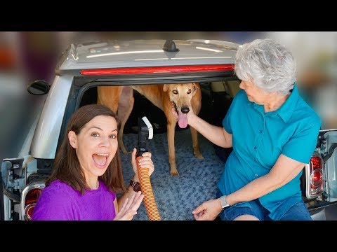 How to Remove Dog Hair from Your Car