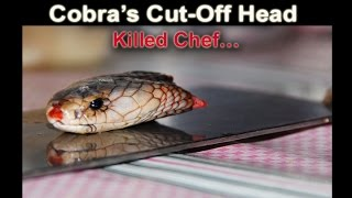 Cobra's Cut-Off Head Killed Chef In China