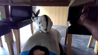 Rabbit likes a piggy back!