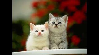 Самые новые смешные видео с домашними животными, смешные коты и кошки, новые приколы, смех до слез !