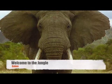 Gabon - Welcome to the Jungle