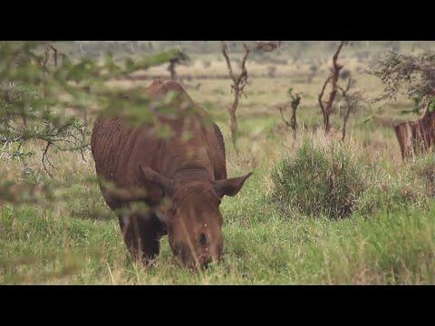 Le parc de Lewa, une réserve privée grand luxe au Kenya