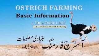 Ostrich Farming Basic Information (ep1) by Raja Tahir Latif