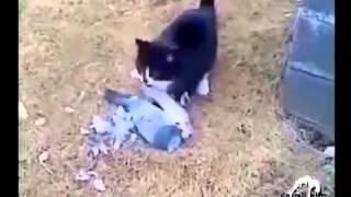 Кот-неудачник   Это самое смешное видео в мире про животных