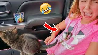 Funniest And Cute Cats to Keep You Smiling! #11   Funny Cats