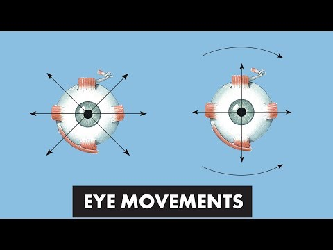 Eye Movements - Anatomical Movements Vs Cardinal Positions Of Gaze - MEDZCOOL