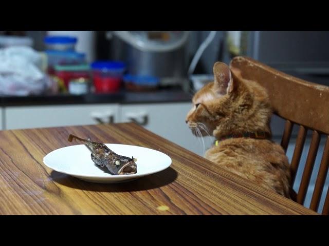 テーブルの上のどんこと猫