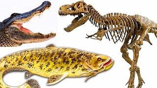 ДИНОЗАВР и РЫБКИ. Мультик про животных. Акулы, крокодилы, пингвины, рыбы, черепахи. Игрушки ТВ.