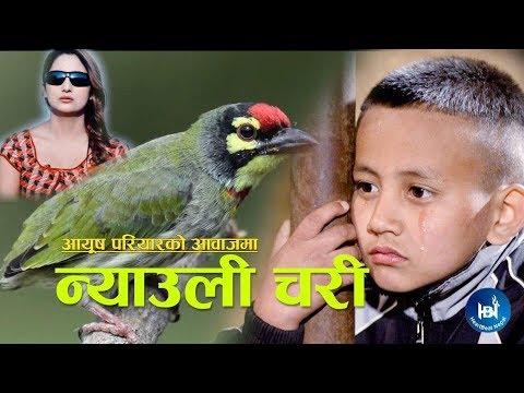 Download Ayush Pariyar's Lok Geet 2018/2075 | NYAULI CHARI | न्याउली चरि | Ft. Aashir Pratap Jung/Rupa Kandel